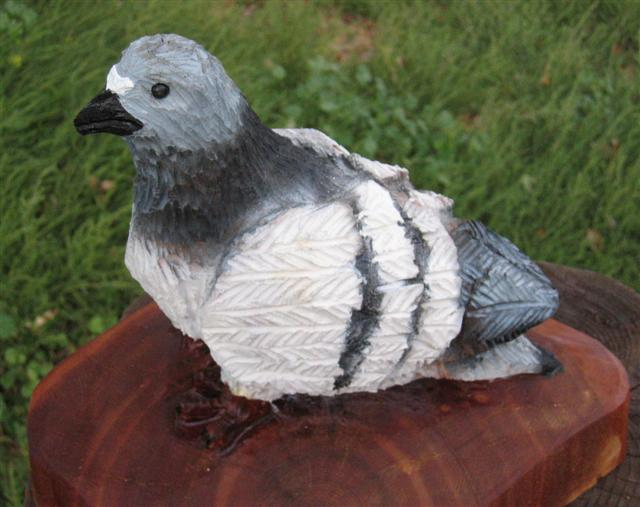 Pigeon - Product Image